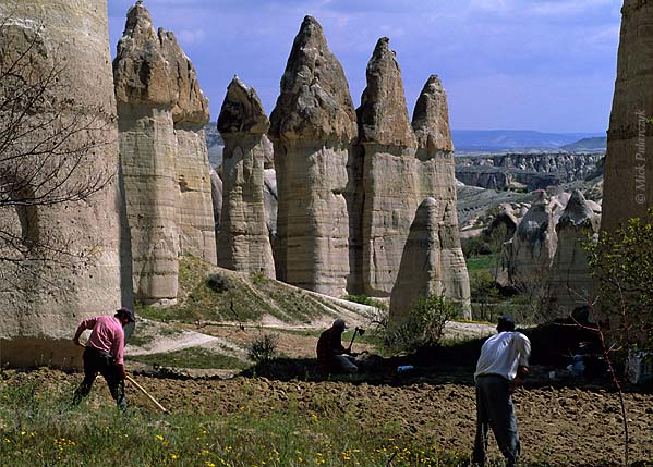 [TURKEY.CENTRAL 26822 'Plowing a vineyard in White Valley.'  	Surrounded by a forest of 'fairy chimneys', two farmhands are plowing an old vineyard in the White (Baglidere) Valley, north of the Cappadocian village of Göreme. In the background the owner of the plot is cutting up the dried out vines with an axe. Photo Mick Palarczyk.