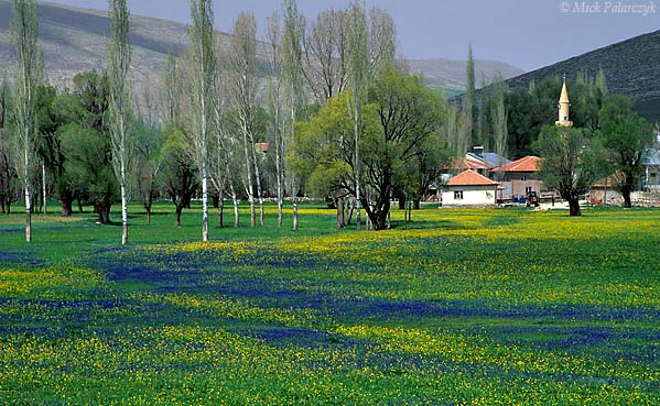 [TURKEY.EAST 27886]