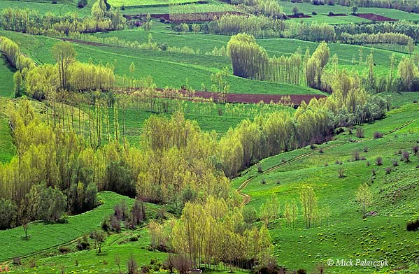 [TURKEY.EAST 27918] 'Spring landscape south of Lake Van.'  	In a spring landscape on the southern shore of Lake Van, near the Kuskunkiran Pass, a ribbon of poplars accompanies a small river. Photo Mick Palarczyk.