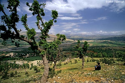 [TURKEY.EAST 27870] 'Looking out over Commagene.'  On the southern slopes of the Taurus mountain range, near the village of Damlacik (east of Adiyaman), a shepherd boy is looking out over a lateral valley of the Euphrates which, in the first century BC, was part of the Commagene kingdom. Not far from here lie the ruins of its capital Arsameia and the famous mountaintop tomb of Nemrud Dag. Photo Mick Palarczyk.