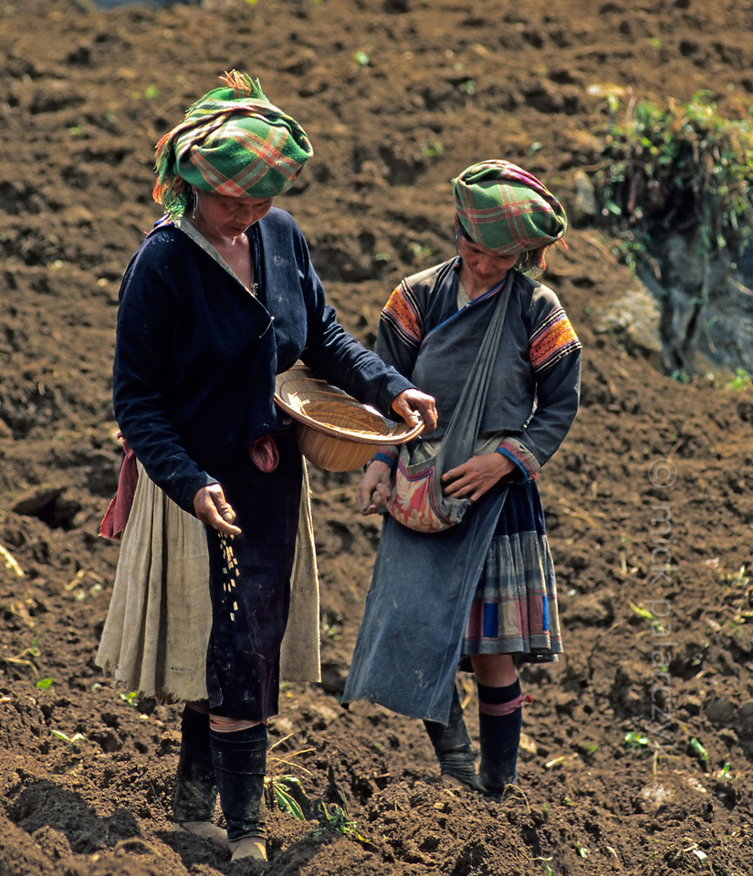 [VIETNAM.NORTH 21.363] 'Sowing.'  Women of a mountain tribe are sowing a field northwest of Tam Duòng. Photo Mick Palarczyk.