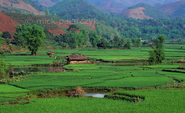 [VIETNAM.NORTH 21.278] 'Rice fields near Yên Châu.'  	Rice fields and ponds occupy the bottom of the Nâm San valley east of Yên Châu. Photo Mick Palarczyk.