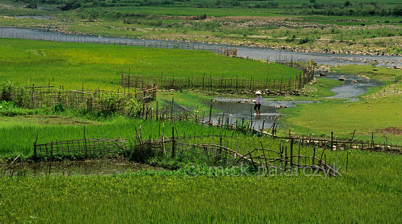 [VIETNAM.NORTH 21.371] 'Rice fields near Lai Châu.'  Rice fields on the banks of the Lay River (a tributary of the Da River) 2 km south of Lai Châu. Photo Mick Palarczyk.