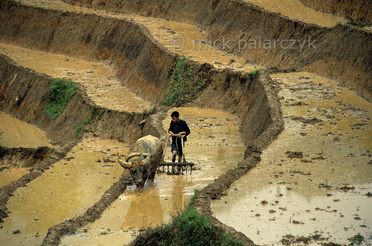 [VIETNAM.NORTH 21.455] 'Plowing Black H'mong boy.'  A Black H'mong boy is plowing a rice field on a steep slope north east of Sapa. Photo Mick Palarczyk