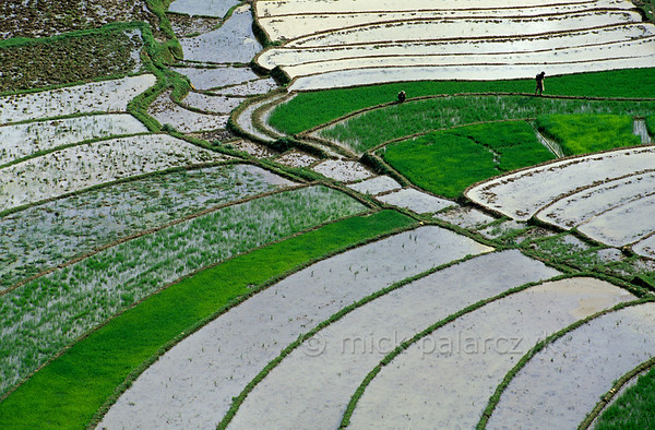 [VIETNAM.NORTH 21.478] 'Watery mosaic.'  	Terraced rice fields form playful mosaics on the slopes of the Muong Hoa Valley east of Sapa. Photo Mick Palarczyk