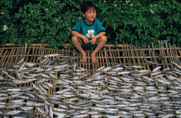 [VIETNAM.NORTH 21.558] 'Drying fish.'  	Beside a road in the valley of the Chay River north of Yên Bái this boy guards bamboo mats with drying fish. Photo Mick Palarczyk