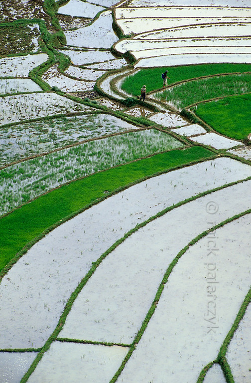 [VIETNAM.NORTH 21.481] 'Watery mosaic.'  	Terraced rice fields form playful mosaics on the slopes of the Muong Hoa Valley east of Sapa. Photo Mick Palarczyk