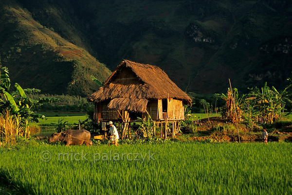 [VIETNAM.NORTH 21.265] 'Stilted house in rice fields.'  	A family of the White Thái mountain tribe lives in this stilted house at Lac Village near Mai Châu. Photo Mick Palarczyk.