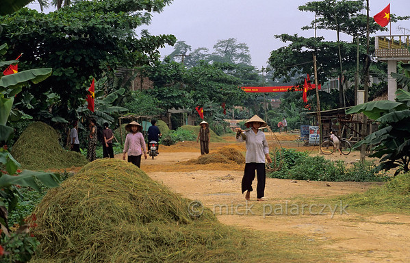 [VIETNAM.NORTH 21.562] 'Street with drying rice straw.'  	Heaps of drying rice straw cover a village street in the Red River valley south of Yên Bái. The national flags are waving to celebrate the birthday of Ho Chi Minh (May 19). Photo Mick Palarczyk