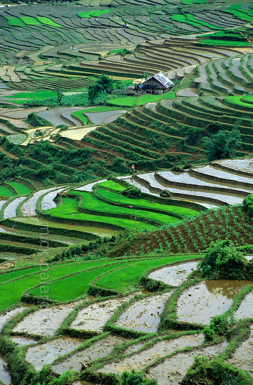 [VIETNAM.NORTH 21.489] 'Terraced landscape.'  	The terraced landscape of the Muong Hoa Valley east of Sapa. Photo Mick Palarczyk