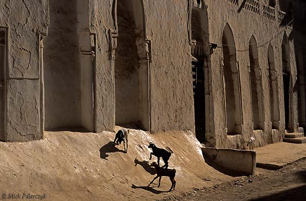 [YEMEN.SOUTH 26563] 'Goats near mosque.'  	Goats play at the foot of the walls that enclose the Al-Jami Mosque (904 AD) in Shibam, an ancient town in the Wadi Hadhramawt. Photo Mick Palarczyk.
