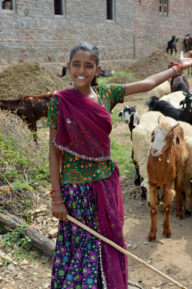 Young Rabbari girl who is not going to school and instead taking care of the live stock at Padiv, Serohi Block, Rajasthan.<br /> <br /> Educate Girls, founded in 2007, is a non-governmental organization that holistically tackles issues at the root of gender inequality in India's educational system. A comprehensive model reforms government schools through community ownership and ensures full enrollment, higher attendance and improved learning outcomes for all girls.
