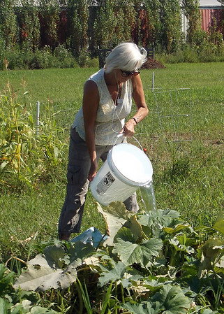 Kathleen Peterson waters her squash and zinnias at Effingham Community Garden, located behind Bob's Discount Home Improvement on South Banker Street.