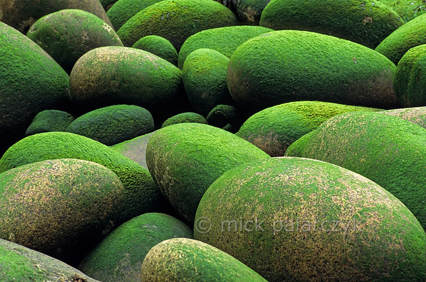 [IRELAND.DONEGAL 21.815] 'Green sweets.'  	Algae overgrown boulders are lying like green sweets on the beach of the Donegal coast near Bloody Foreland. Photo Mick Palarczyk.