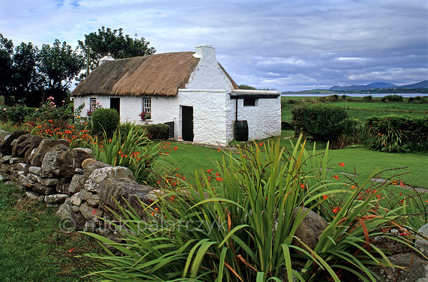 [IRELAND.DONEGAL 21.766] 'Thatched cottage.'  	The temperate Irish climate allows Montbretias to flower abundantly along the garden wall of a typical Irish thatched cottage, south of Dunkineely. Photo Mick Palarczyk.