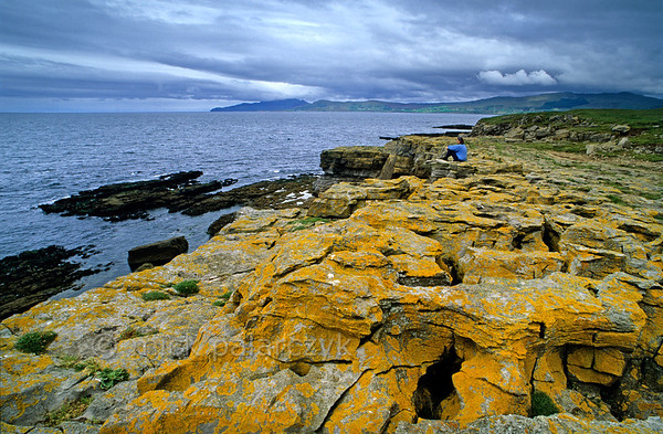 [IRELAND.DONEGAL 21.775] 'St. John's Point.'  	Yellow lichens cover the eroded limestone cliffs at St. John's Point, a nice spot to look out over McSwyne's Bay and the Atlantic Ocean. Photo Mick Palarczyk.
