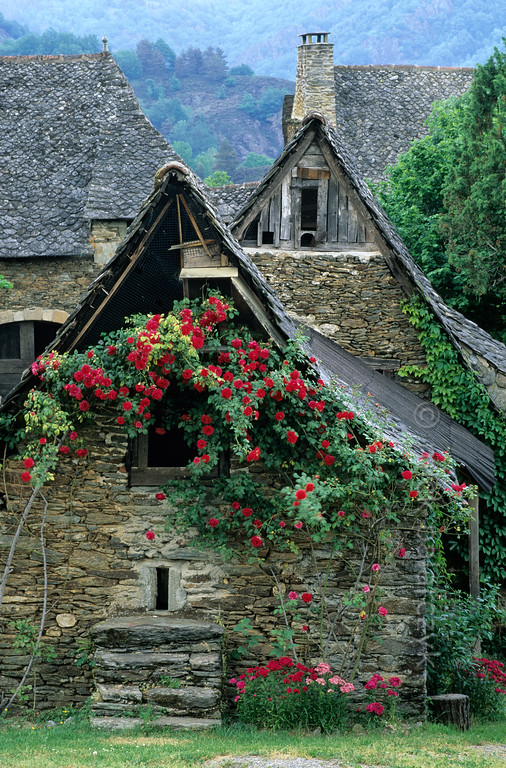 [FRANCE.AUVERGNE 28895] 'Barn in la Rouquette.'  Roses cover a barn in la Rouquette, a hamlet near Cassaniouze in the southwest corner of the Cantal. Photo Mick Palarczyk.