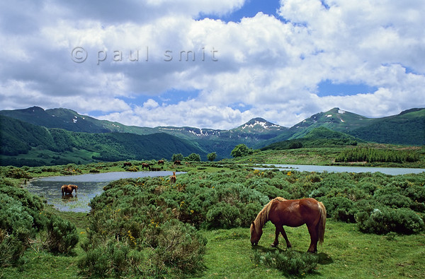 [FRANCE.AUVERGNE 28875] 'Horses in the Vallée de Cheylade.'  In the Vallée de Cheylade near Le Claux horses roam freely in and around the Étang (lake) de Lascourt. In the background rises the Puy Mary, the most prominent mountain of the Cantal.  It is the leftover of one of the central lava chimneys of the Cantal volcano, once the largest stratovolcano of Europe. Photo Paul Smit.