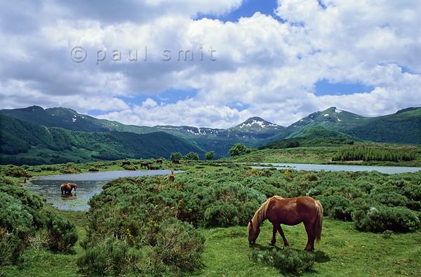 Horses in the Vallée de Cheylade.