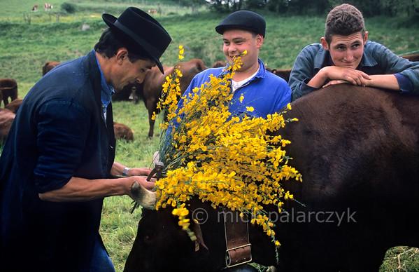Farmhands preparing for transhumance in Allanche.