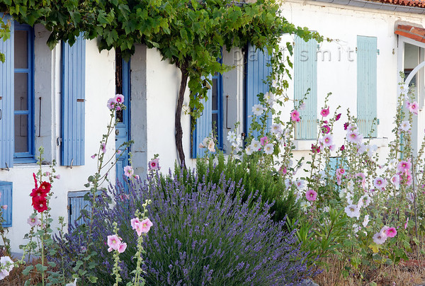 Flowers on Rue Napoléon on Ile d'Aix.