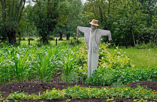 [FRANCE. ATLANTIC 30023] 'Scarecrow near Arçais.'