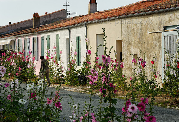 [FRANCE. ATLANTIC 30125] 'Hollyhocks on Ile d'Aix.'