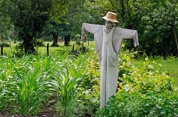 [FRANCE. ATLANTIC 30024] 'Scarecrow near Arçais.'