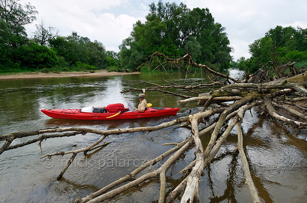 "[FRANCE.BOURGOGNE 10778] 'Kayak in Loire natural reserve.'  	Grabbing a dead tree trunk, a kayaker tries to determine his position  in a secondary branch of the Loire near Pouilly-sur-Loire. Here the Loire meanders through the ""Réserve Naturelle Val de Loire"", a stretch of 19 km downstream of La Charité-sur-Loire where the river has preserved much of its natural character. Photo Mick Palarczyk."