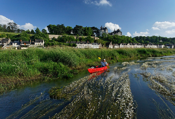 [FRANCE.LOIRE 10827] 'Chaumont seen from a paddler's perspective.'  The 15th century castle of Chaumont-sur-Loire looks down on a paddler navigating the loire between Blois and Amboise. Locally the river is covered by large patches of flowering River Water-crowfoot (Ranunculus fluitans; NL: Vlottende waterranonkel). Rooted in the riverbed, it produces strands of up to 6 meters in length, that are stretched out in the direction of the current. Photo Paul Smit