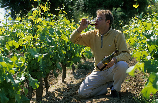 [FRANCE.LOIRE 10820] 'Winegrower near Chaumont.'  	Vincent Girault, winegrower and owner of Chateau Gaillard (near Chaumont) in one of his vineyards next to the Loire. Girault produces biological wines, among which the AOC Touraine-Mesland. Photo Paul Smit.