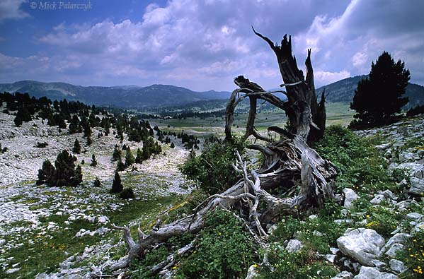 [FRANCE.ALPSNORTH 24.522] 'Hauts Plateaux du Vercors-2.'  The Hauts Plateaux du Vercors, the southern highest part of the Vercors, is a wild place without villages or roads. Photo Mick Palarczyk.