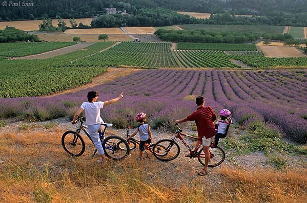 [FRANCE.ALPSSOUTH 24.402] 'Cyclists in lavender fields-2.'  	In the Drôme valley a biking family enjoys the sights and scents of lavender fields near les Payats, south of Châtillon-en-Diois. Photo Paul Smit.