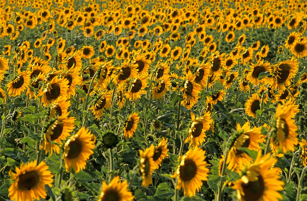 [FRANCE.ALPSSOUTH 24.382]