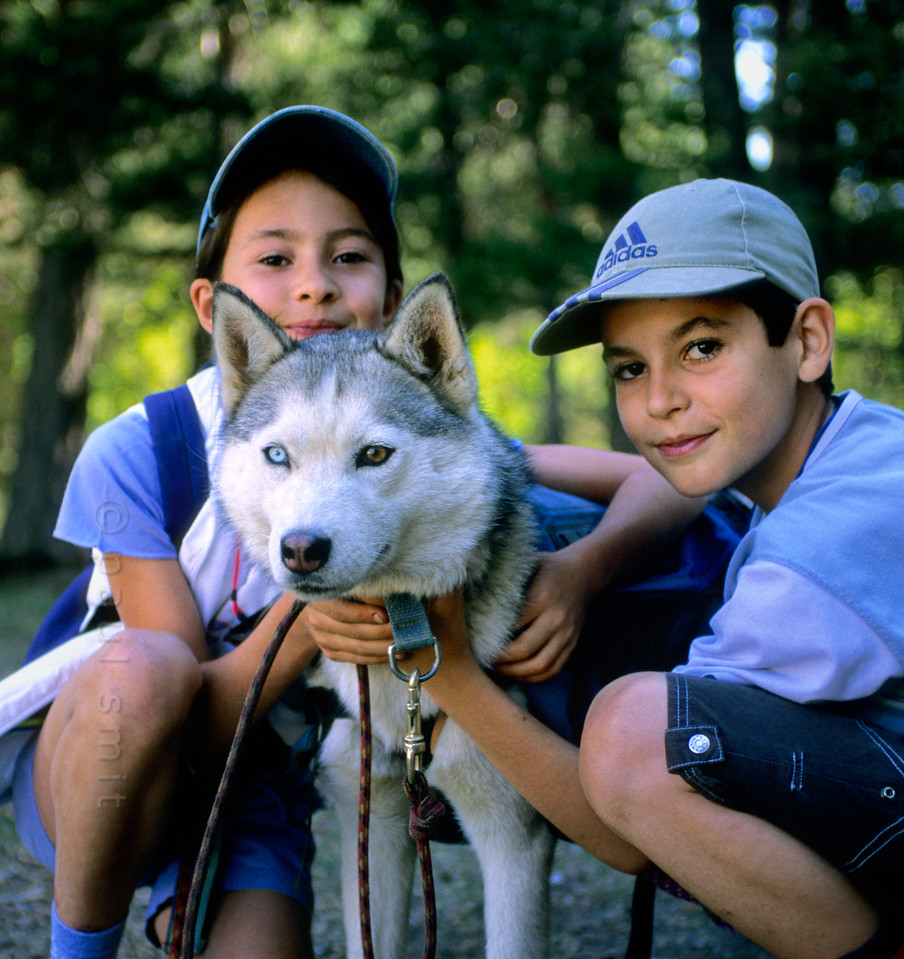 [FRANCE.ALPSNORTH 11003] 'Walking with huskies.'  Christophe Caron (not in the picture) organises winter dog sledding with his huskies in La Norma (Haute Maurienne). To keep the animals fit in summer he has thought of something that children happen to like very much: cani-rando, walking with a husky attached to your belt. After an introduction on how to treat the huskies and getting acquainted with your own dog, the hike takes off, accompanied by Cristophe and one or two parents. It's an easy hike, because the huskies pull you up the slope. There are several pauses and a picknick, moments of cuddling and caressing. At the end the farewell is emotional, because the children have opened up their hearts to the animals. Photo Paul Smit.