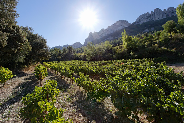 [FRANCE.PROVENCE 10926] 'Sundrenched vines.'  In the nature reserve of the Dentelles de Montmirail near Orange you can enjoy beautiful hikes among sundrenched vineyards. This is the location where the grapes of some of the famous crus of the the Côte du Rhône ripen, such as AOC Gigondas, AOC Vacqueyras and AOC Beaumes de Venis. Dentelles means 'lace' in French and that is not as strange as it seems because the peaks have a filigree quality about them. Erosion has punched holes in the stone which has resulted in the formation of natural arches and bridges. Frilly as lace, so to say. Photo Paul Smit.