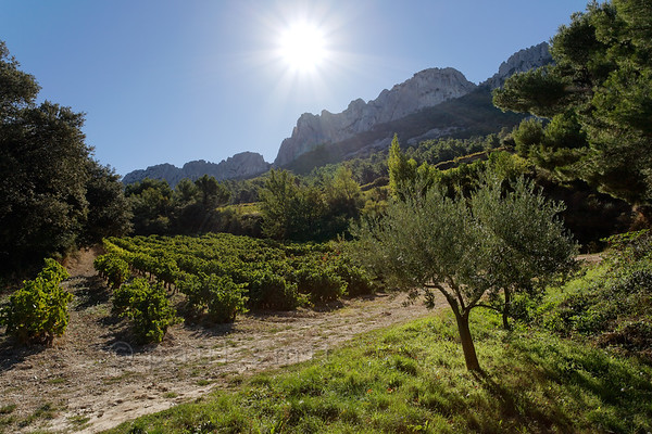 [FRANCE.PROVENCE 10925] 'Sundrenched vines.'  In the nature reserve of the Dentelles de Montmirail near Orange you can enjoy beautiful hikes among sundrenched vineyards. This is the location where the grapes of some of the famous crus of the the Côte du Rhône ripen, such as AOC Gigondas, AOC Vacqueyras and AOC Beaumes de Venis. Photo Paul Smit.