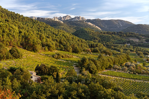 [FRANCE.PROVENCE 10927] 'Idyll of vineyards and nature.'  From a viewpoint at the edge of the village of Séguret your gaze can wander over small vineyards interspersed with stretches of wood and the mountain range of the Dentelles de Montmirail. Grapes that ripen in such lovely surroundings must deliver a good wine: the Côte du Rhône Villages Séguret. Photo Paul Smit.