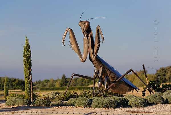 [FRANCE.PROVENCE 10919] 'Giant praying mantis.'  Jean Henri Fabre was a ethologist from the second half of the 19th century who liked to study the behaviour of insects. Only when he reached the age of fifty six was he able to realize his life long dream. He bought an old Provençal farm in Sérignan-du-Comtat, surrounded by wild sun-scourged land that was ideal for studying insects. Nowadays his garden, partly cultured, party left wild, is open for visitors. As is his house and study with the famous tiny desk he loved to work at. But what really catches the eye is the enormous praying mantis (Mantis religiosa) on the roundabout where visitors have to take the turn for the museum (sculpture by Jean-Pierre Maurice, ± 2009). Photo Paul Smit.