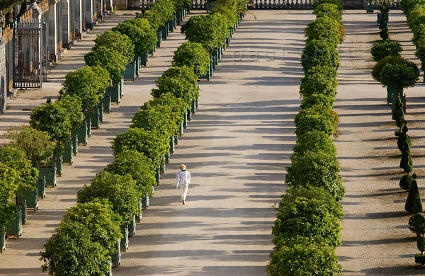 "[FRANCE.ILEDEFRANCE 11071] 'Orangerie, Palace Gardens, Versailles.'  Overlooked by the Château, the Orangerie - with its wide space and pure lines and dating from 1686 - is one of the crowning achievements of architect Jules Hardouin-Mansart. The Orangerie Parterre covers no less than three hectares. In the reign of Louis XIV it was decorated with sculptures now kept in the Louvre museum. Consisting of six sections of lawn and a circular pool, in the summer it features 1,055 trees in wooden boxes, mostly orange trees, but palm trees, oleanders, pomegranate trees and eugenias as well. They spend the winter inside.  The lady enjoying the orangerie is dressed in white because she participated in the White Picnic (""pique-nique en blanc""), which is organized on Bastille Day, the 14th of July. That day thousands of people come together with their picnic baskets and have a festive meal on the banks of the Grand Canal. After the meal, many spread out over the gardens, of which the Orangerie is a part. Photo Paul Smit."