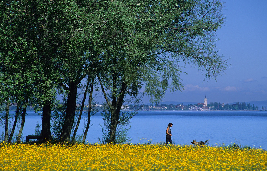 [SWITZER.MITTEL 00887]  'Flower field near Arbon.'  A young woman is playing with her dog in a field of spring flowers along the Bodensee near Arbon, with a view towards Germany. Photo Paul Smit.