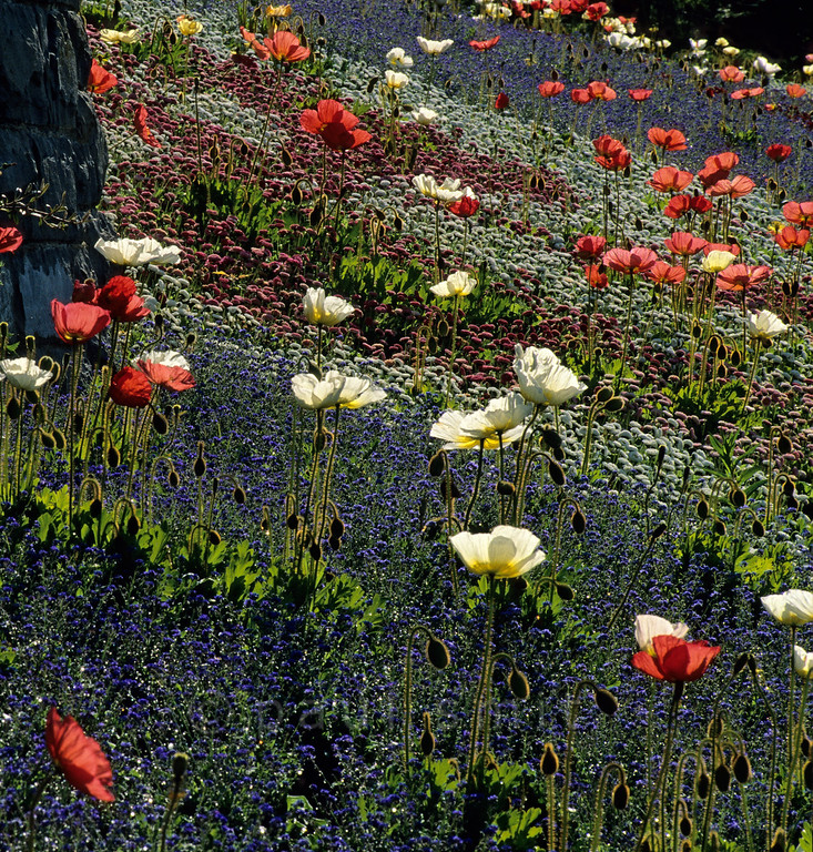 [GERMANY.BAWU 00768] 'Flower island Mainau.'  Not only is Mainau extremely busy between 10 a.m. and 4 p.m., the light is the least flattering and the flowers are less fresh. Go before 10 (from 7 a.m. on) and the flowering fields are at their best ... and all yours. Photo Paul Smit.