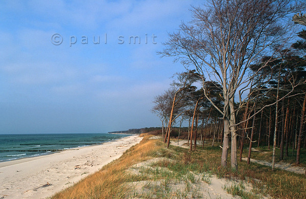 [GERMANY.MECKLENBURG 9355] 'Forest at the beach.'  At the Darss, central part of peninsula Fischland-Darss-Zingst, the forest reaches the beach along the Baltic coast. It is part of the Western Pomerania Lagoon Area National Park (Nationalpark Vorpommersche Boddenlandschaft). Photo Paul Smit.