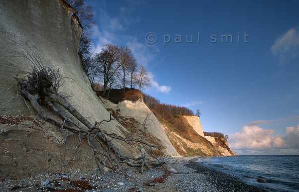 [GERMANY.MECKLENBURG 9445]  'Limestone cliffs of Jasmund national park, Rügen.'  The Jasmund national park on Rügen preserves beech forests that reach to the edge of the limestone cliffs for which the island is famous. The sea hammers the cliffs during bad weather and pushes them back bit by bit, so now and then a tree is coming down. The beach is made up of flintstones, that come out of the cliffs.  Photo Paul Smit.