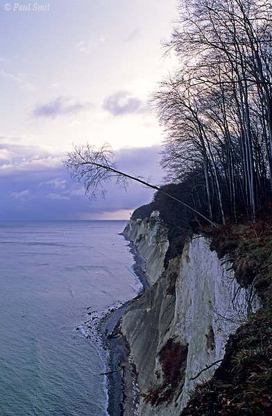 [GERMANY.MECKLENBURG 9448]  'Limestone cliffs of Jasmund national park, Rügen.'  The famous limestone cliffs of Jasmund national park on the island of Rügen, seen in the pinkish winter light of sunset. The picture is taken from the Ernst-Moritz-Arndt viewpoint, called after an artist from the romantic period, who is known for his painting of this spot. Rügen was a favourite destination of German Romantics in those days.  Photo Paul Smit.