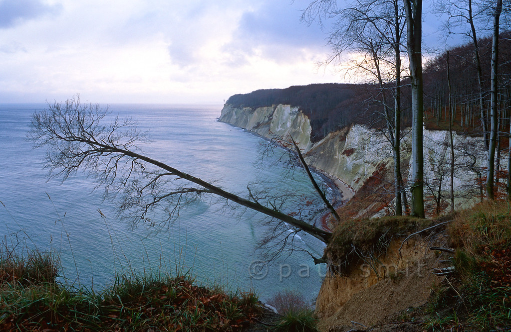 [GERMANY.MECKLENBURG 9449]  'Limestone cliffs of Jasmund national park, Rügen.'  The famous limestone cliffs of Jasmund national park on the island of Rügen, seen in the pinkish winter light of sunset. The picture is taken from the Ernst-Moritz-Arndt viewpoint, called after an artist from the romantic period, who is known for his painting of this spot. Rügen was a favourite destination of German Romantics in those days. Photo Paul Smit.