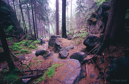 [GERMANY.SACHSEN 7417 'Forest of the Elbe Sandstone Mountains.'  Hiker in a forest southeast of the Schrammsteine in the Nationalpark Sächsische Schweiz (Saxon Switzerland National Park). With a good map this labyrinth turns into a walking paradise. Photo Paul Smit.