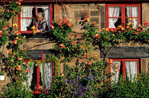 [BRITAIN.MIDDLEENGLAND 22046] 'Canal cottage.'  At Cheddleton, south of Leek, a cottage on the bank of the Caldon Canal is covered in flowers. Photo Mick Palarczyk.