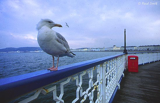 [BRITAIN.WALES 2412] 'At the pier of Llandudno.' In Llandudno a pier stretches into the sea, with a Victorian air of stately elegance. It's tip, not visible in the picture, is furnished with typical English amusement, where the sound of video arcades mingles with the breaking waves and seagulls skilfully fish out the remains of fish and chips. Photo Paul Smit.