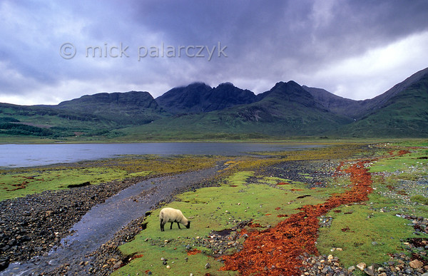 [BRITAIN.HEBRIDES 27849] 'Bla Bheinn seen from Loch Slapin.'  	The shore of Loch Slapin near Torrin on southern Skye offers a nice view of Bla Bheinn. The mountain lies just east of the Cuillins and has the same geologic provenance as this mountain range: a remnant of a large volcano which erupted when the Atlantic Ocean opened up and the American continent started to drift away from Europe, 60 million years ago. The grassy shore of the estuary has an orange high water line made up of kelp. Photo Mick Palarczyk.